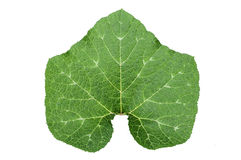 Gourd leaf isolated Royalty Free Stock Photo