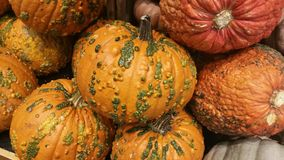 Gourd-like Pumpkins Royalty Free Stock Photo