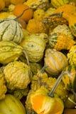 Gourd Mix Stock Photos