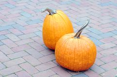 Gourd and pumpkin Royalty Free Stock Photography