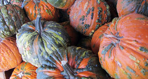 Gourd pumpkins in a group. Royalty Free Stock Image