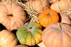 Gourd pumpkins Royalty Free Stock Photo