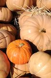 Gourd pumpkins Stock Images