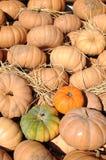 Gourd pumpkins Stock Photos