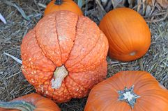 Gourd pumpkins Royalty Free Stock Image