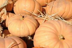 Gourd pumpkins Stock Image