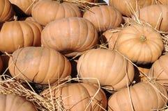 Gourd pumpkins Stock Photo