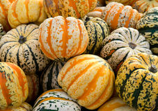 Gourd pumpkins in a pile. Royalty Free Stock Images