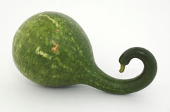 Gourd - Speckled Swan Stock Photography