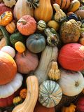 Gourd Tower. Color image of fall gourds Royalty Free Stock Photography