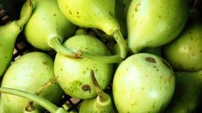 Gourd vegetable Stock Image