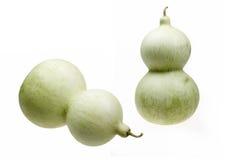 Gourd verde fotos de stock