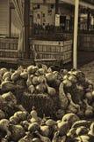 Gourds в великолепии Sepia Стоковые Изображения