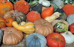 Gourds и сквош Стоковое Фото