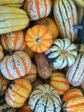 Gourds и сквош Стоковое Изображение
