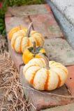 Gourds и тыквы Стоковые Фотографии RF