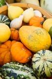 gourds корзины стоковые фотографии rf