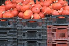 gourds красные Стоковое Изображение