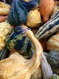 gourds Красочные gords Много различных форм Стоковое Фото