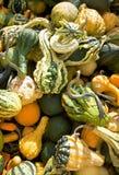 Gourds Imagem de Stock Royalty Free