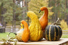 Free Gourds Royalty Free Stock Images - 11619769