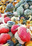 Gourds. This is an image of Gourds captured in the fall Royalty Free Stock Photos
