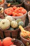 gourds стоковые изображения rf