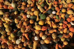 Gourds Stock Images