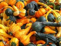 gourds Стоковое Изображение RF