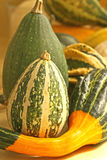 Gourds. Display of variety of gourds Stock Photography