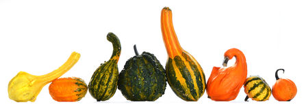 Gourds Stock Photo