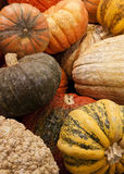 Gourds. Group of colorful gourds royalty free stock images