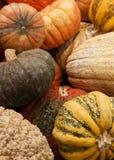 Gourds Royalty Free Stock Photos