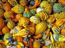 Gourds. Assorted fall gourds stock images