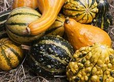 Gourds fotografia de stock royalty free