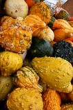 Gourds 5729. Vertical view of colorful gourds in a pile.  A small touch of sky showing Royalty Free Stock Image