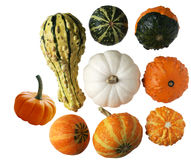 Gourds. Colorful gourds and pumpkins isolated on white background royalty free stock photos