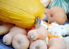 Fall Harvest Gourds Royalty Free Stock Images