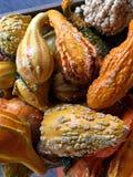gourds Стоковая Фотография