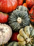 Gourds Stock Image