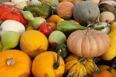 Gourds & abóboras misturados fotografia de stock royalty free