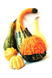 Gourds Assorted do outono Imagens de Stock Royalty Free