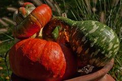 Gourds of Autumn Royalty Free Stock Photo
