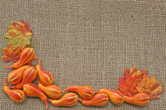 Gourds and autumn leaves Stock Image