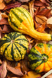 Gourds on Autumn Leaves. Colorful gourds on Autumn leaves on the ground Stock Photography