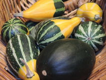Gourds in Basket. Basket of Gourds for the Fall harvest season Stock Image
