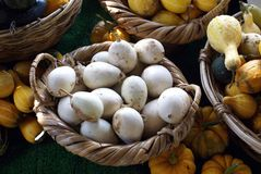 Gourds in baskets at a market for sale Royalty Free Stock Image
