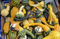 Gourds. A box of gourds in various shapes and colors for autumn stock image