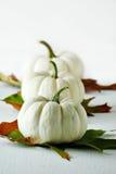 Gourds brancos imagem de stock