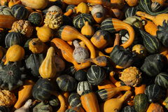 Gourds in Bright Sunshine Stock Photos